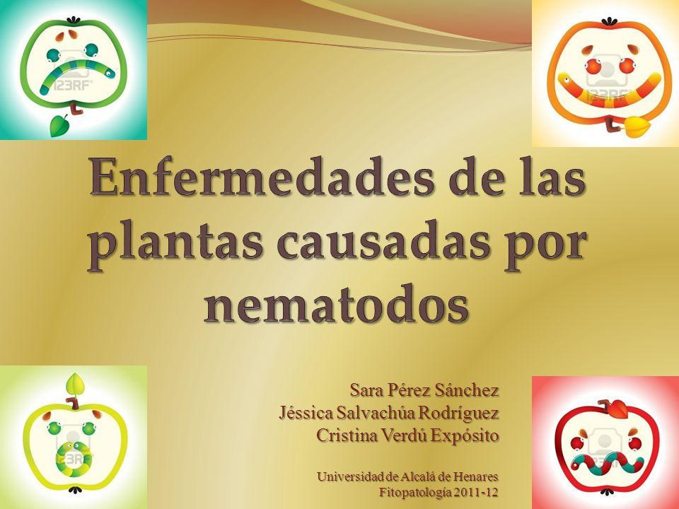 Enfermedades de las plantas causadas por nematodos - ppt video ...