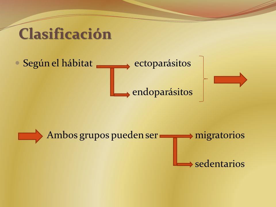 Clasificación Según el hábitat ectoparásitos endoparásitos