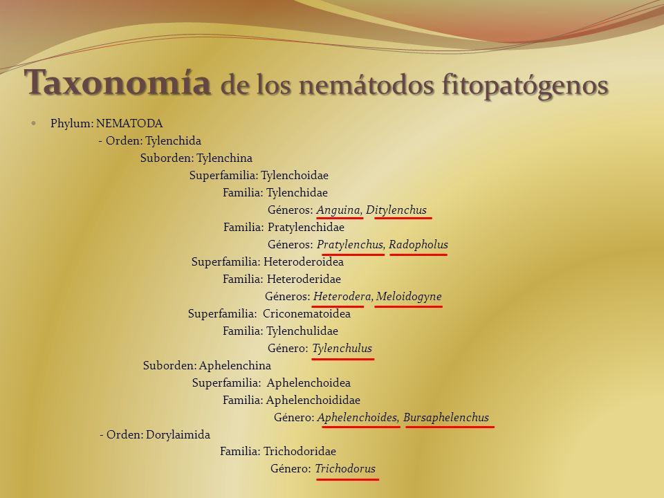 Taxonomía de los nemátodos fitopatógenos