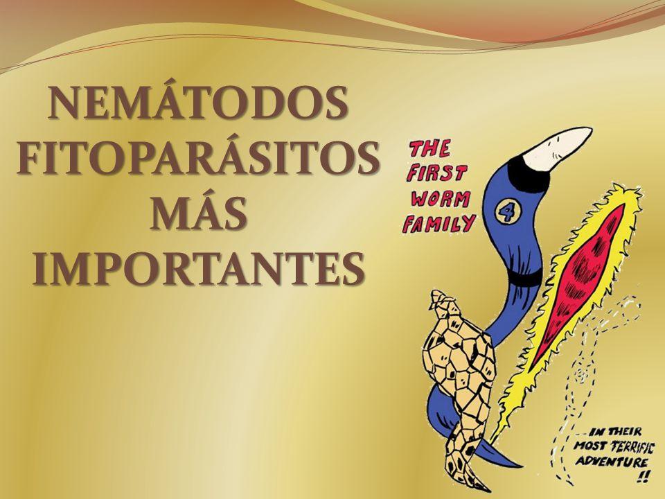 NEMÁTODOS FITOPARÁSITOS MÁS IMPORTANTES
