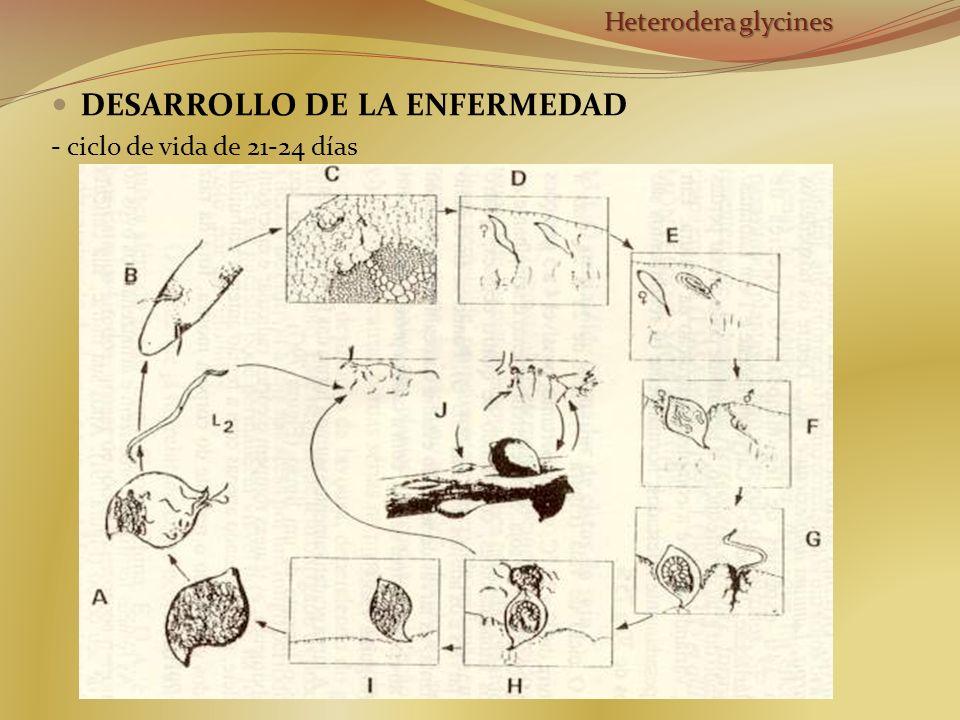 DESARROLLO DE LA ENFERMEDAD