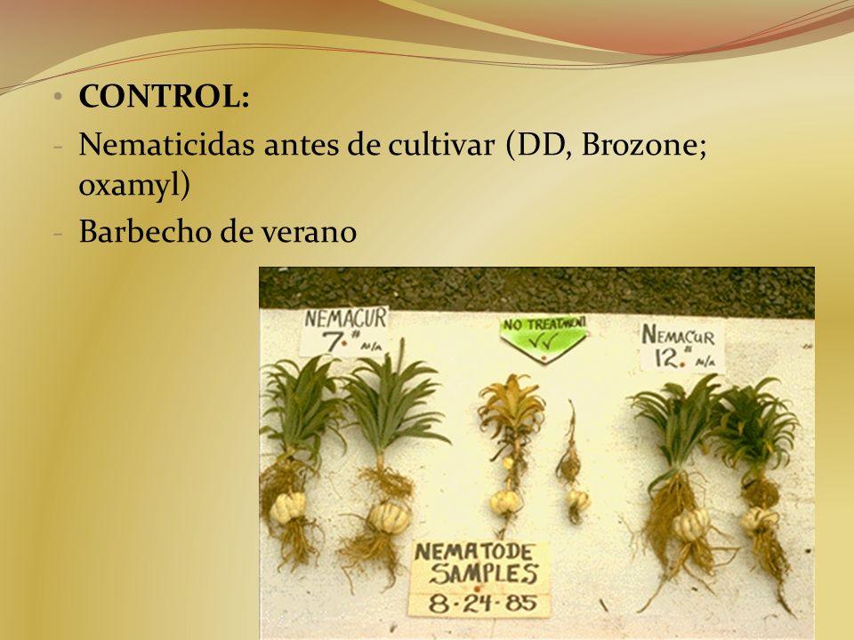 Nematicidas antes de cultivar (DD, Brozone; oxamyl) Barbecho de verano