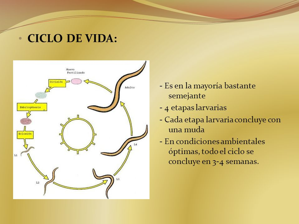 CICLO DE VIDA: