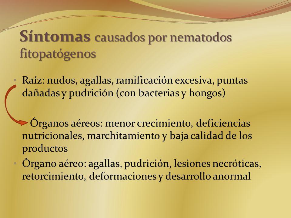 Síntomas causados por nematodos fitopatógenos