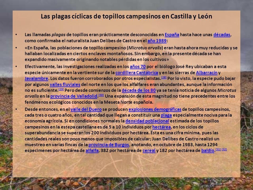 Las plagas cíclicas de topillos campesinos en Castilla y León