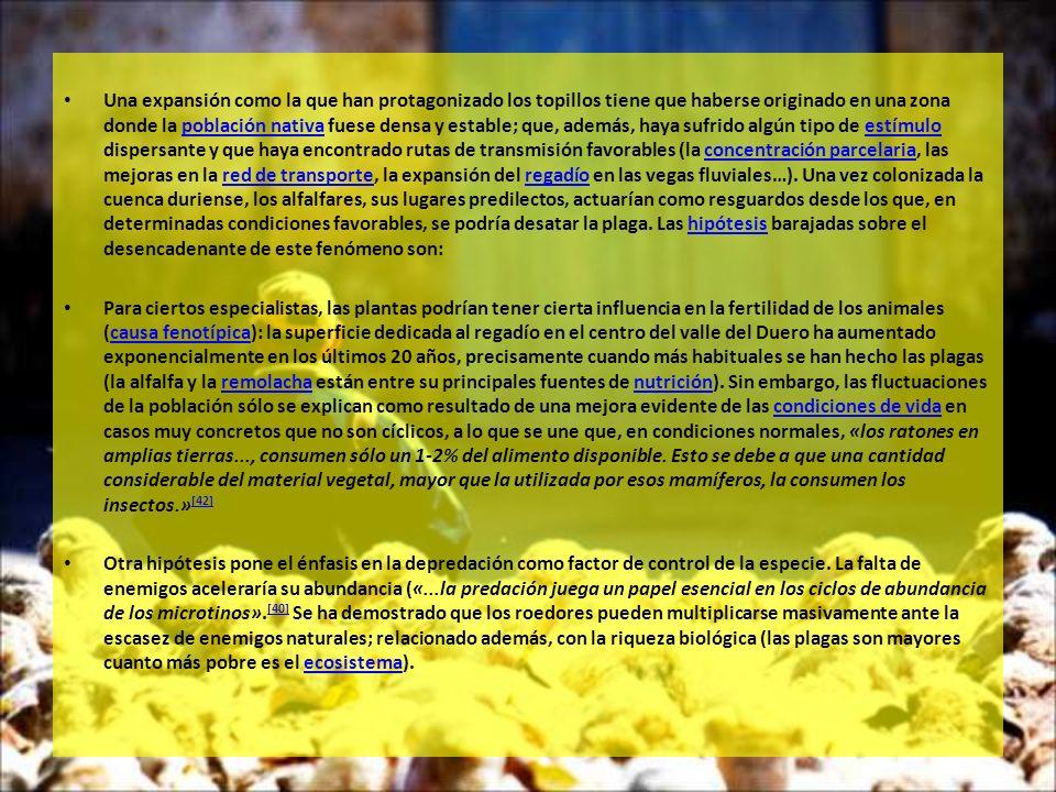 Una expansión como la que han protagonizado los topillos tiene que haberse originado en una zona donde la población nativa fuese densa y estable; que, además, haya sufrido algún tipo de estímulo dispersante y que haya encontrado rutas de transmisión favorables (la concentración parcelaria, las mejoras en la red de transporte, la expansión del regadío en las vegas fluviales…). Una vez colonizada la cuenca duriense, los alfalfares, sus lugares predilectos, actuarían como resguardos desde los que, en determinadas condiciones favorables, se podría desatar la plaga. Las hipótesis barajadas sobre el desencadenante de este fenómeno son: