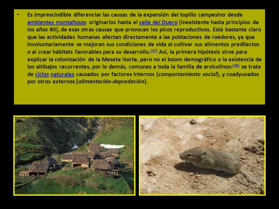 Es imprescindible diferenciar las causas de la expansión del topillo campesino desde ambientes montañosos originarios hasta el valle del Duero (inexistente hasta principios de los años 80), de esas otras causas que provocan los picos reproductivos.