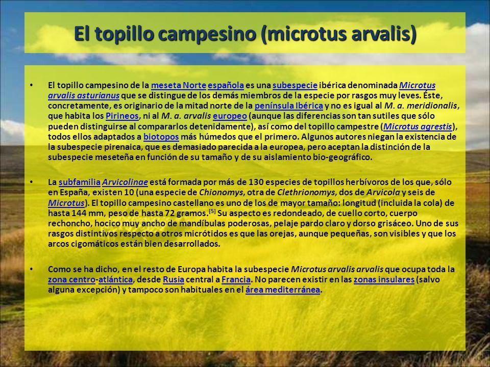 El topillo campesino (microtus arvalis)