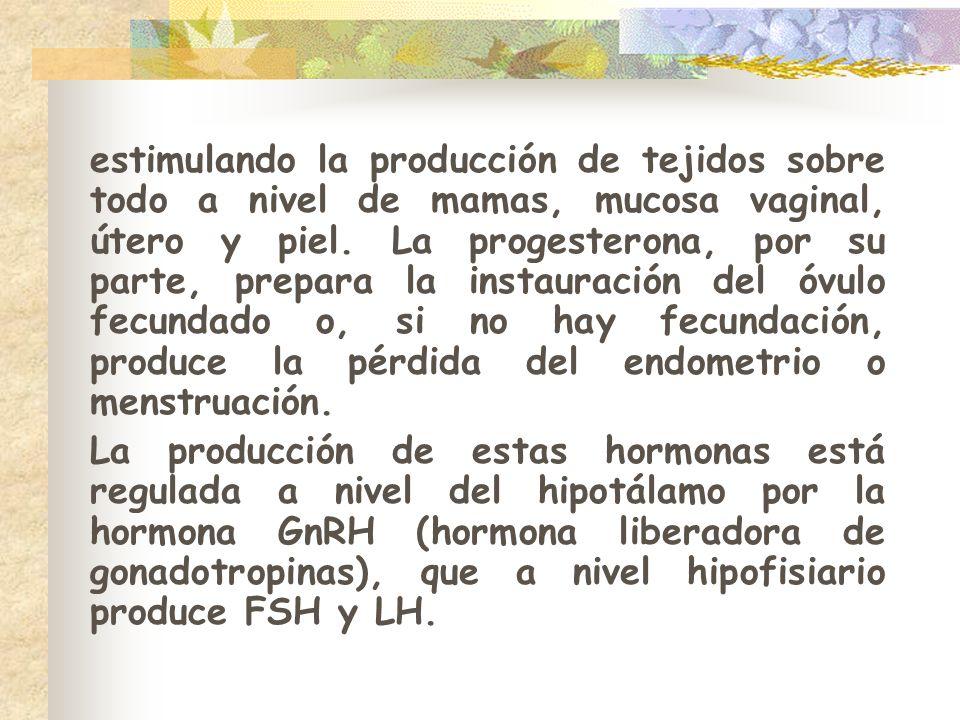 estimulando la producción de tejidos sobre todo a nivel de mamas, mucosa vaginal, útero y piel. La progesterona, por su parte, prepara la instauración del óvulo fecundado o, si no hay fecundación, produce la pérdida del endometrio o menstruación.