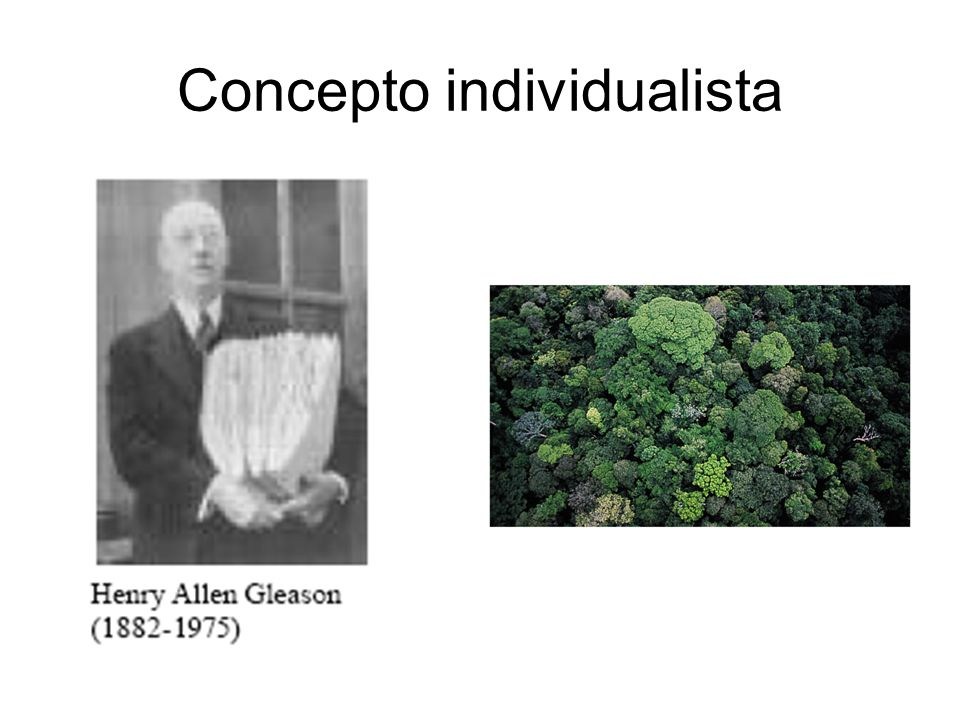 Concepto individualista