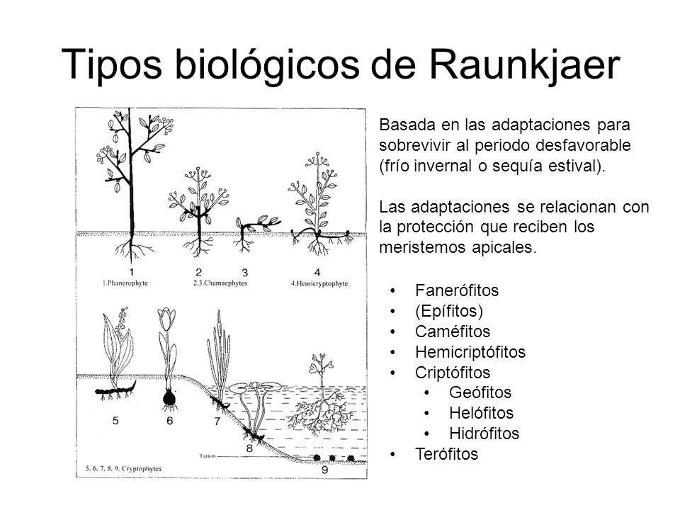 Tipos biológicos de Raunkjaer