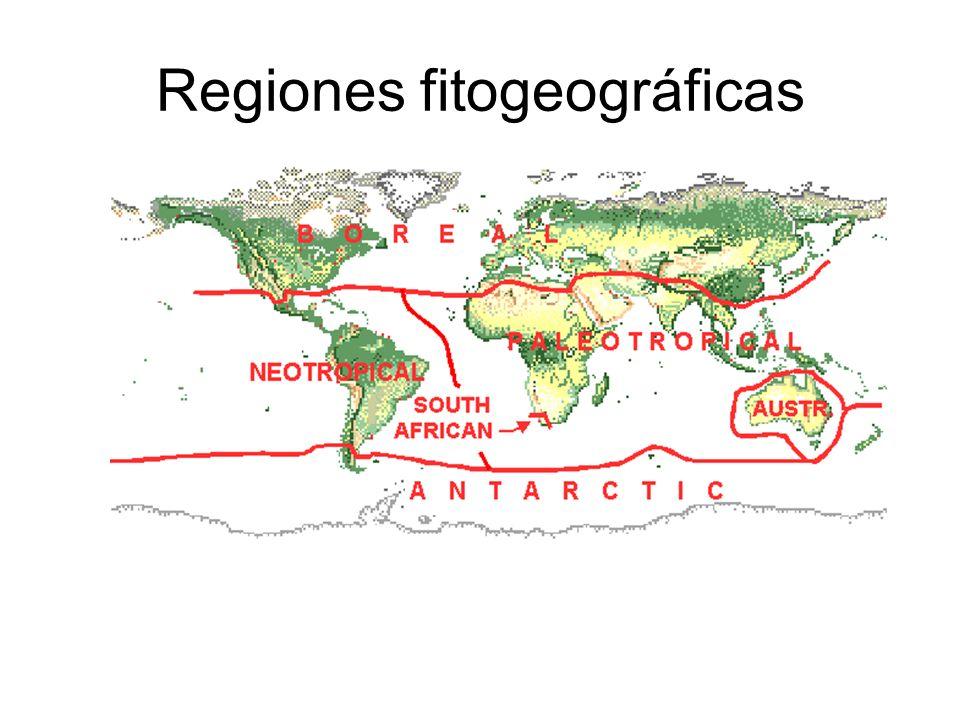Regiones fitogeográficas