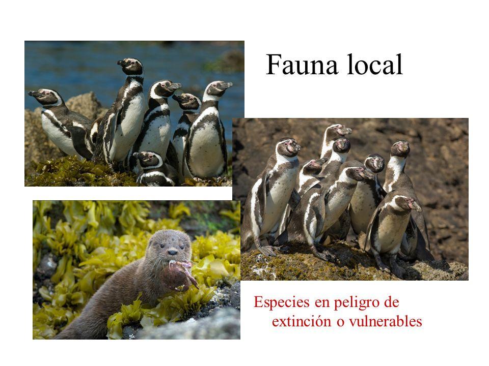 Fauna local Especies en peligro de extinción o vulnerables