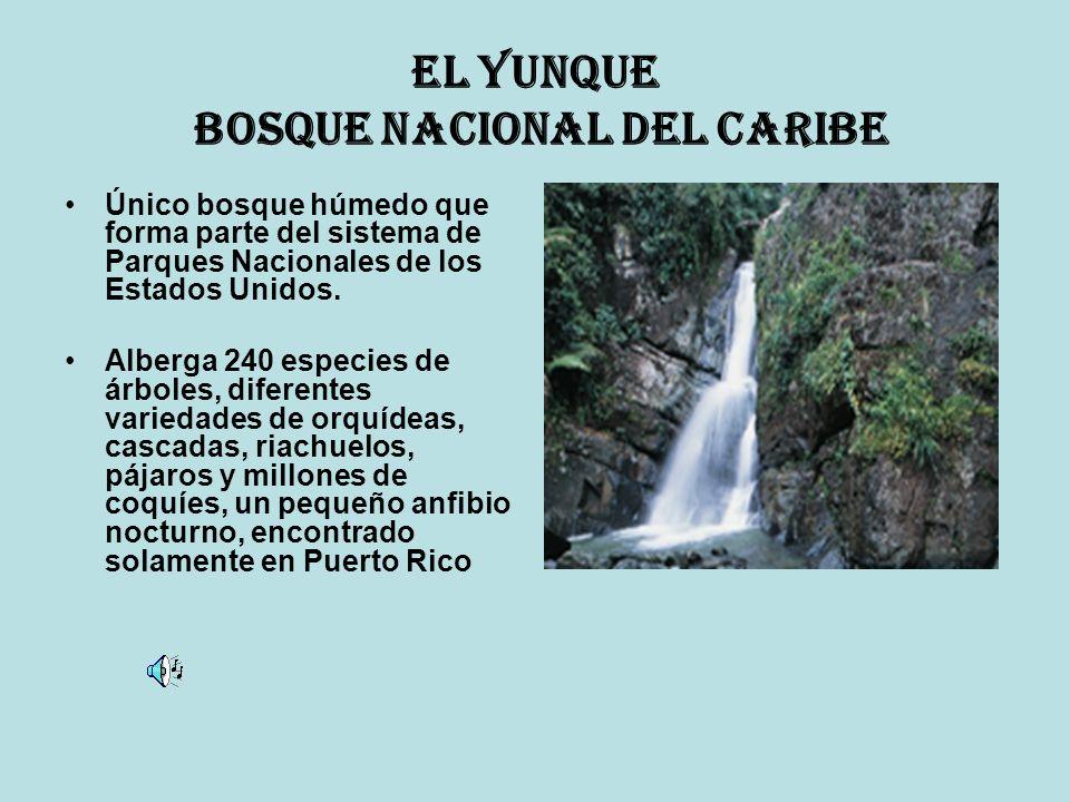 El Yunque Bosque Nacional del Caribe