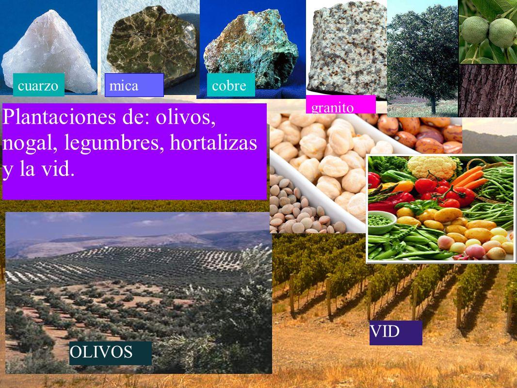 Plantaciones de: olivos, nogal, legumbres, hortalizas y la vid.