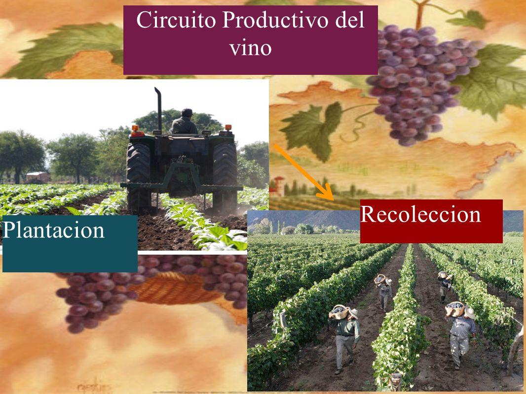 Circuito Productivo Del Vino : Cuyo feli h delfi a lu m r y mateo g ppt