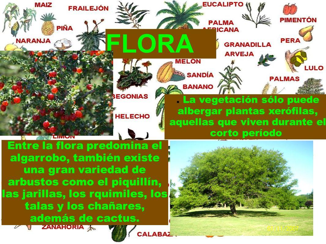 FLORA . La vegetación sólo puede albergar plantas xerófilas, aquellas que viven durante el corto período