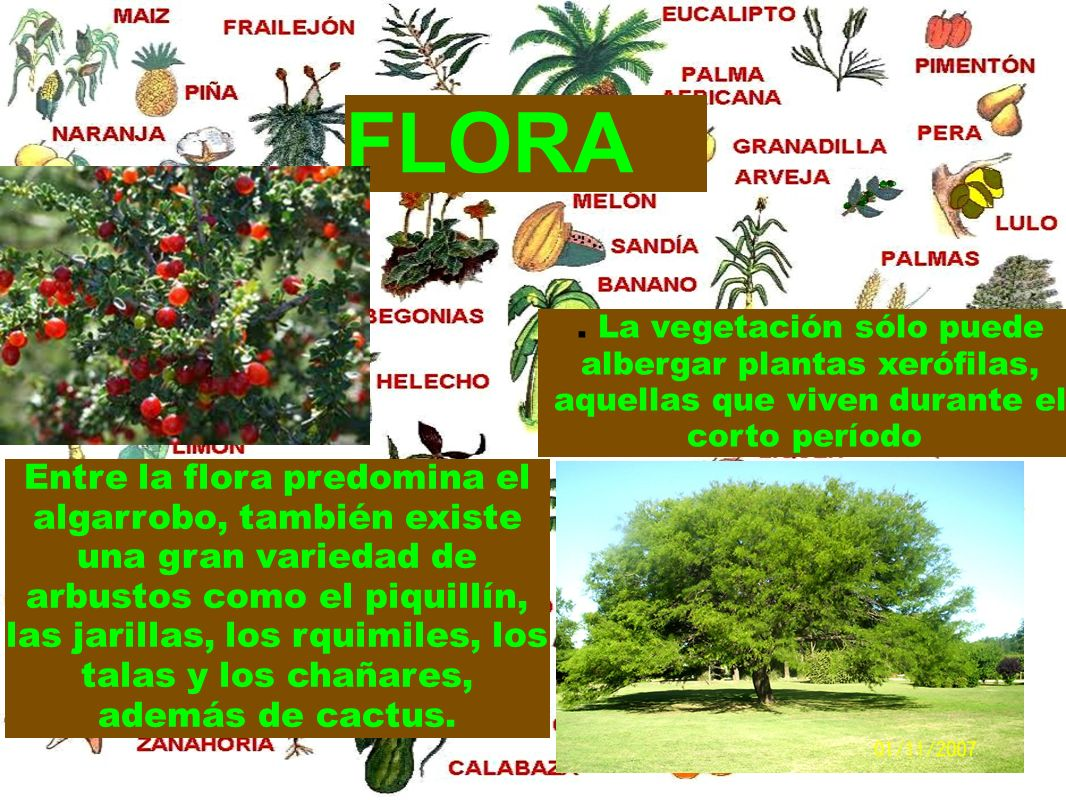 FLORA. La vegetación sólo puede albergar plantas xerófilas, aquellas que viven durante el corto período