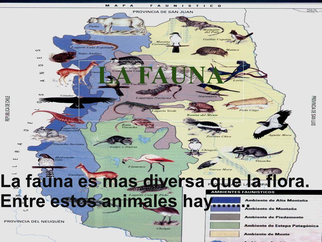 Fauna LA FAUNA La fauna es mas diversa que la flora. Entre estos animales hay........