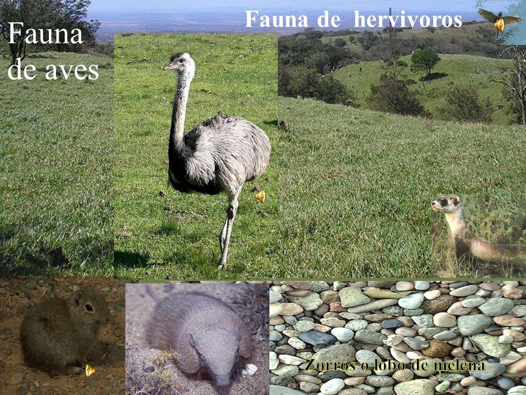 Fauna de hervivoros Fauna de aves Zorros o lobo de melena
