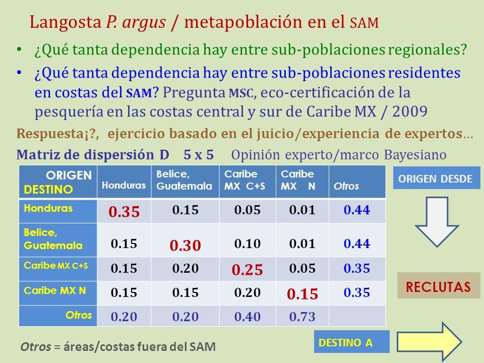 Langosta P. argus / metapoblación en el sam