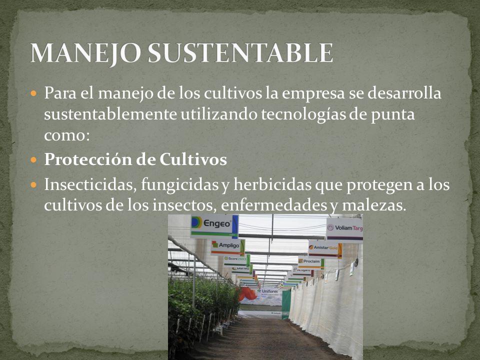 MANEJO SUSTENTABLE Para el manejo de los cultivos la empresa se desarrolla sustentablemente utilizando tecnologías de punta como: