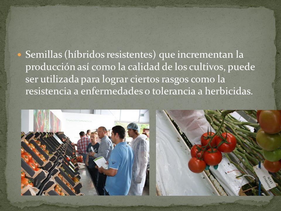 Semillas (híbridos resistentes) que incrementan la producción así como la calidad de los cultivos, puede ser utilizada para lograr ciertos rasgos como la resistencia a enfermedades o tolerancia a herbicidas.