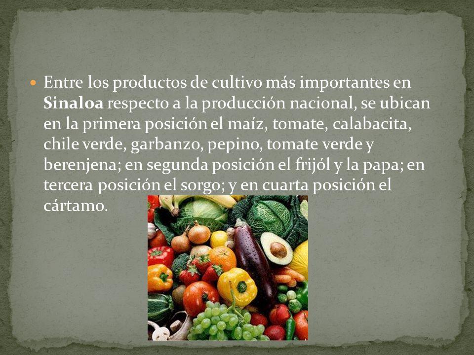 Entre los productos de cultivo más importantes en Sinaloa respecto a la producción nacional, se ubican en la primera posición el maíz, tomate, calabacita, chile verde, garbanzo, pepino, tomate verde y berenjena; en segunda posición el frijól y la papa; en tercera posición el sorgo; y en cuarta posición el cártamo.