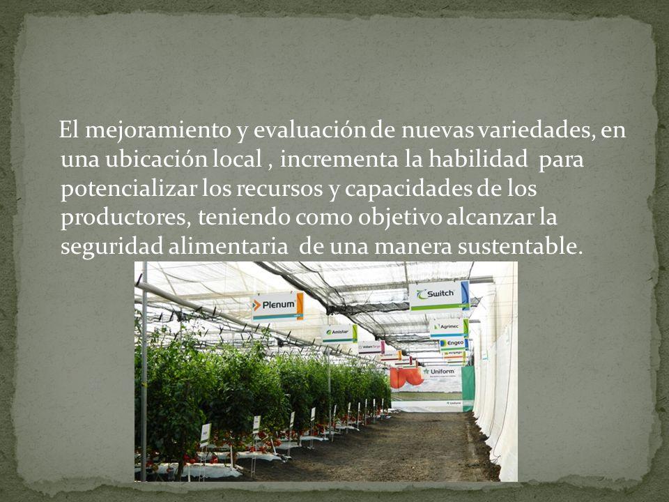El mejoramiento y evaluación de nuevas variedades, en una ubicación local , incrementa la habilidad para potencializar los recursos y capacidades de los productores, teniendo como objetivo alcanzar la seguridad alimentaria de una manera sustentable.