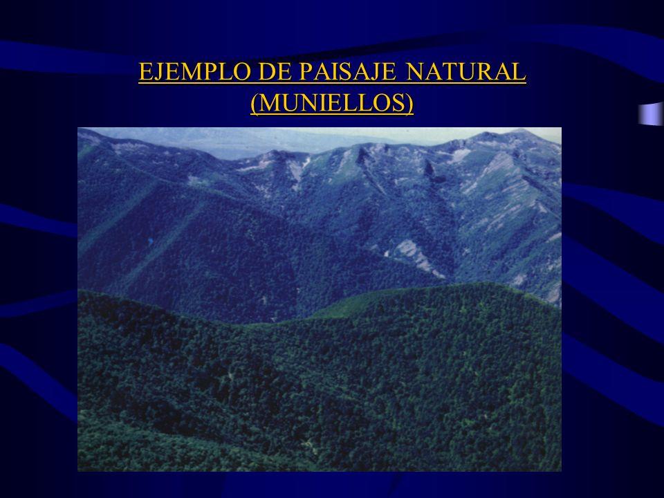 EJEMPLO DE PAISAJE NATURAL (MUNIELLOS)