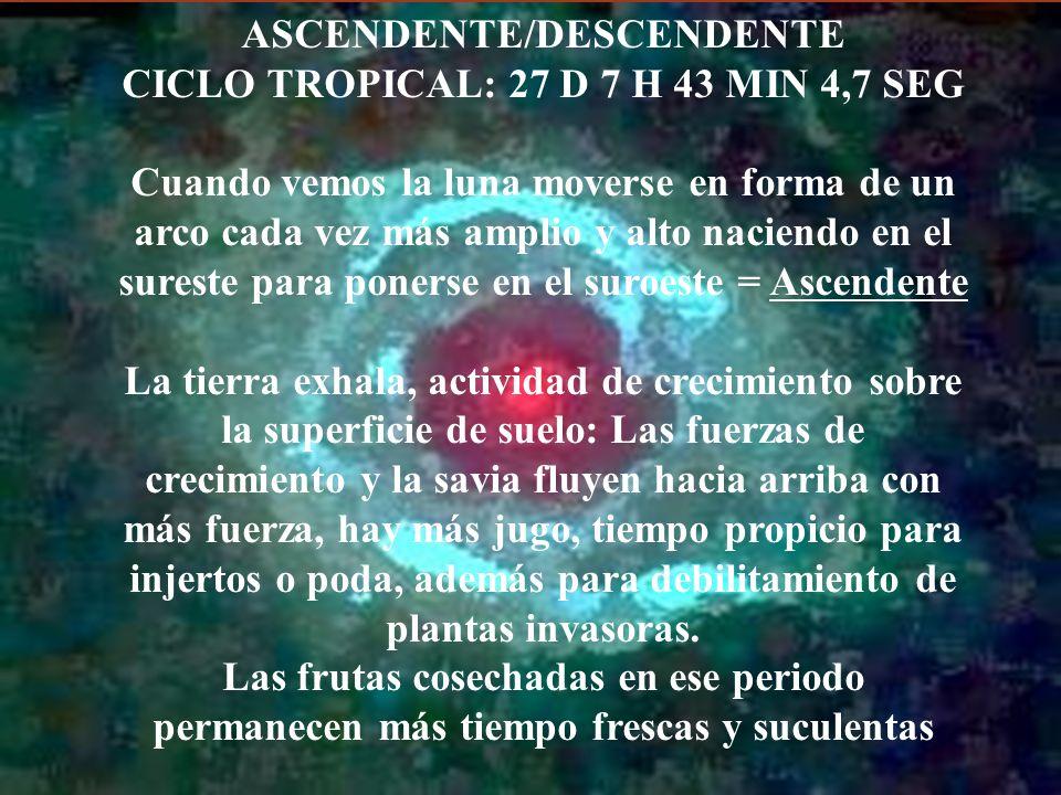 ASCENDENTE/DESCENDENTE CICLO TROPICAL: 27 D 7 H 43 MIN 4,7 SEG
