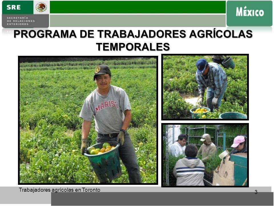 PROGRAMA DE TRABAJADORES AGRÍCOLAS TEMPORALES