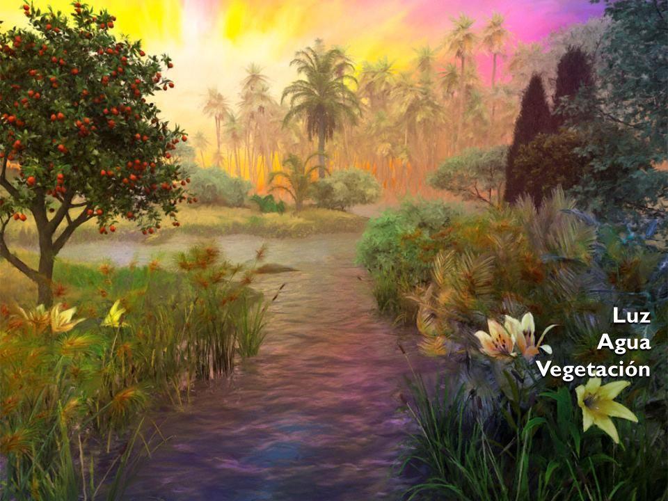 Luz Agua Vegetación