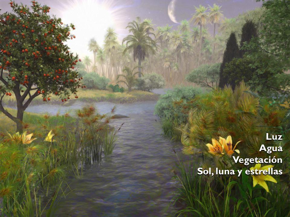 Luz Agua Vegetación Sol, luna y estrellas