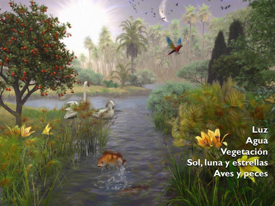 Luz Agua Vegetación Sol, luna y estrellas Aves y peces