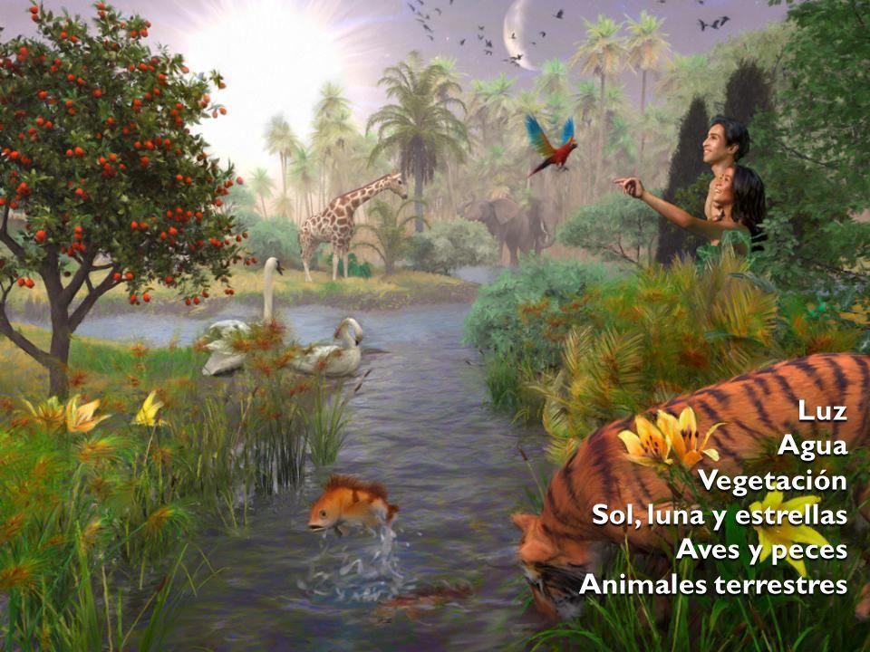 Luz Agua Vegetación Sol, luna y estrellas Aves y peces Animales terrestres