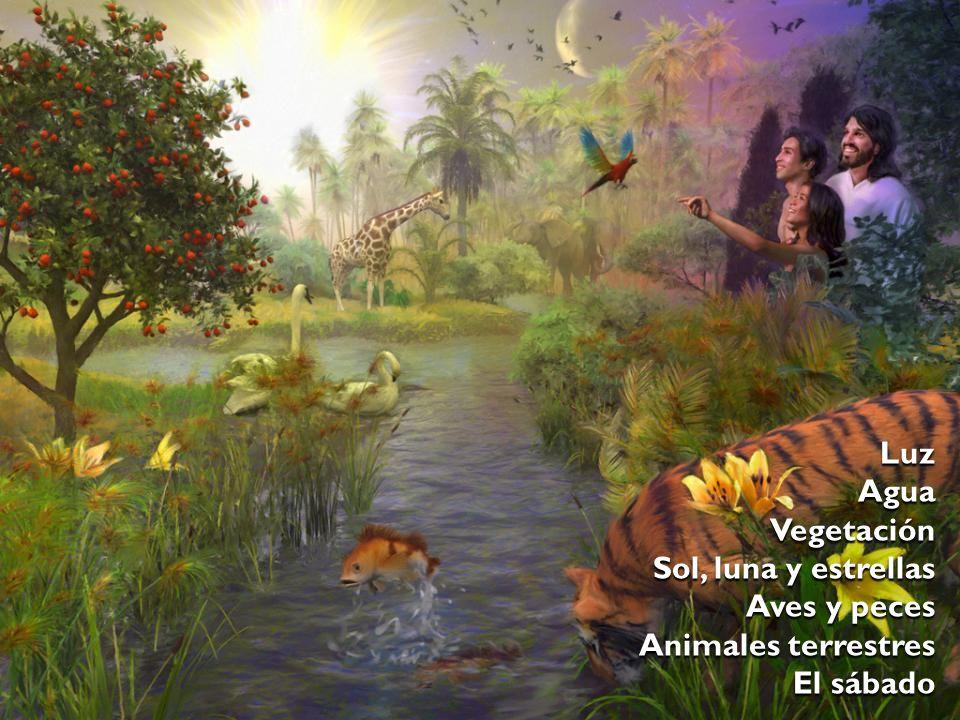 Luz Agua Vegetación Sol, luna y estrellas Aves y peces Animales terrestres El sábado