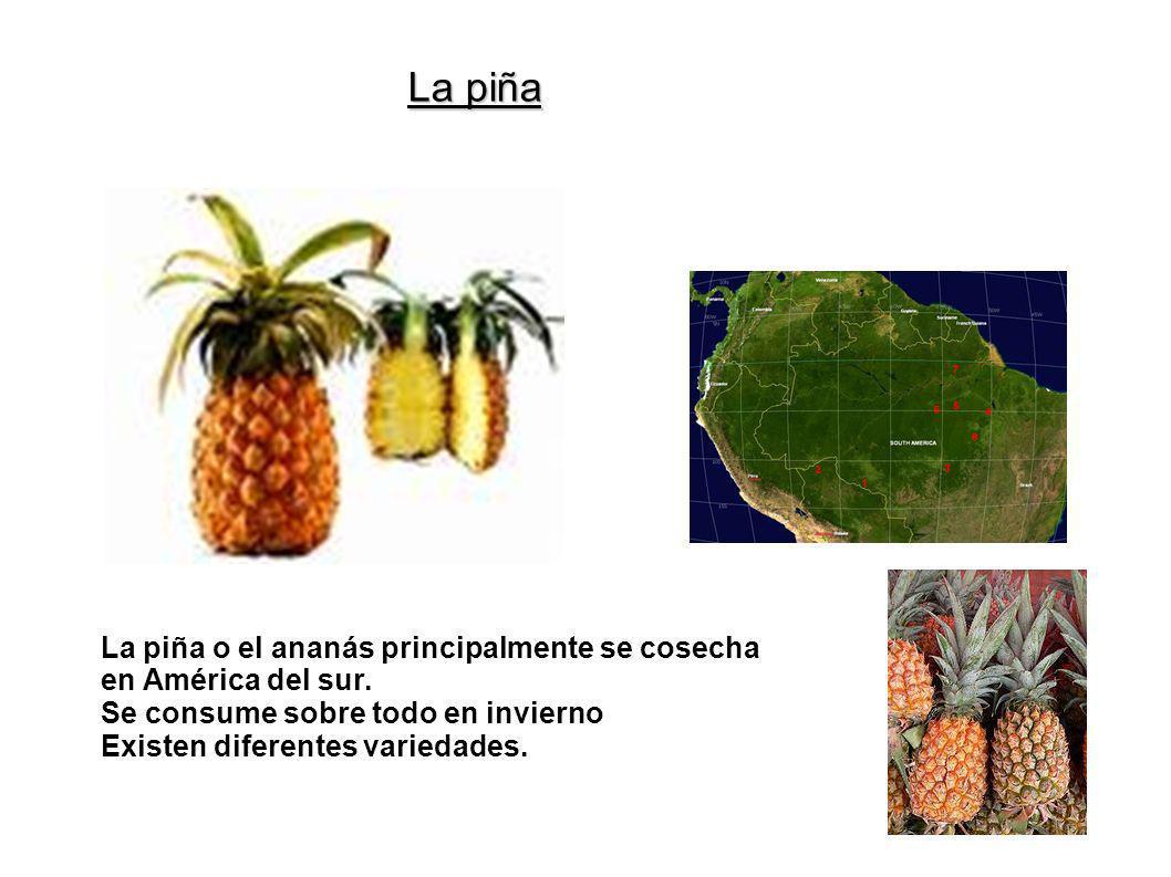 La piña La piña o el ananás principalmente se cosecha