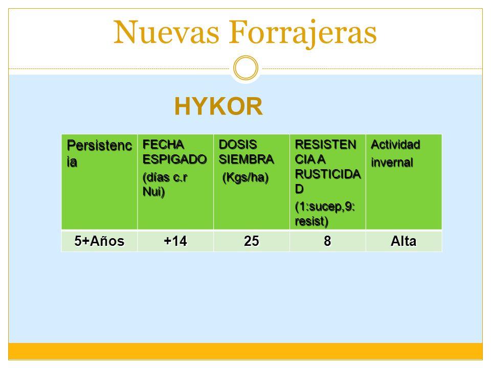Nuevas Forrajeras HYKOR Persistencia 5+Años +14 25 8 Alta