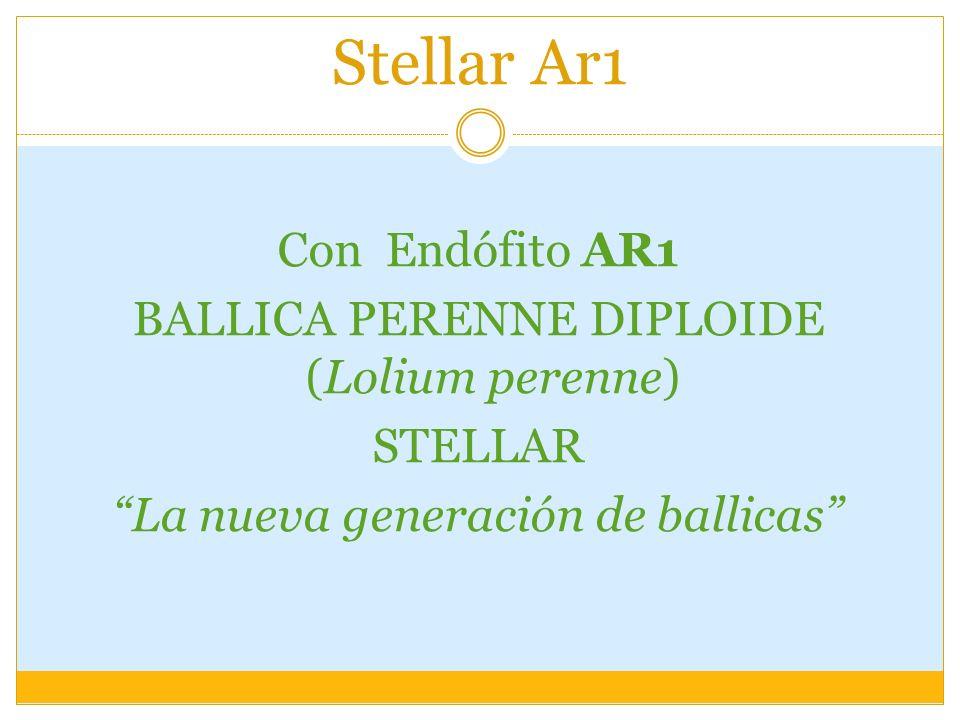 Stellar Ar1 Con Endófito AR1 BALLICA PERENNE DIPLOIDE (Lolium perenne)