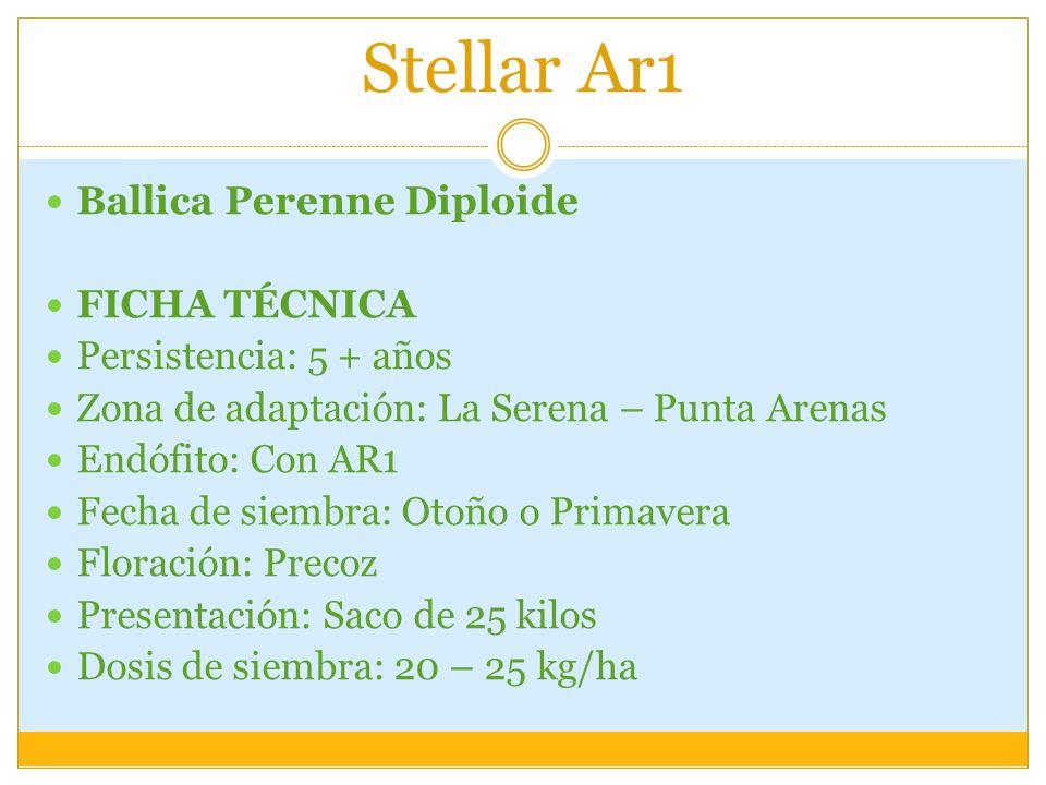 Stellar Ar1 Ballica Perenne Diploide FICHA TÉCNICA