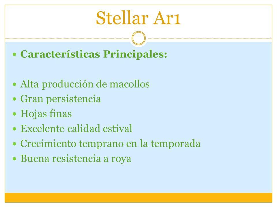 Stellar Ar1 Características Principales: Alta producción de macollos