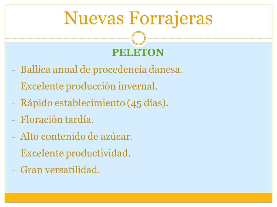 Nuevas Forrajeras PELETON Ballica anual de procedencia danesa.