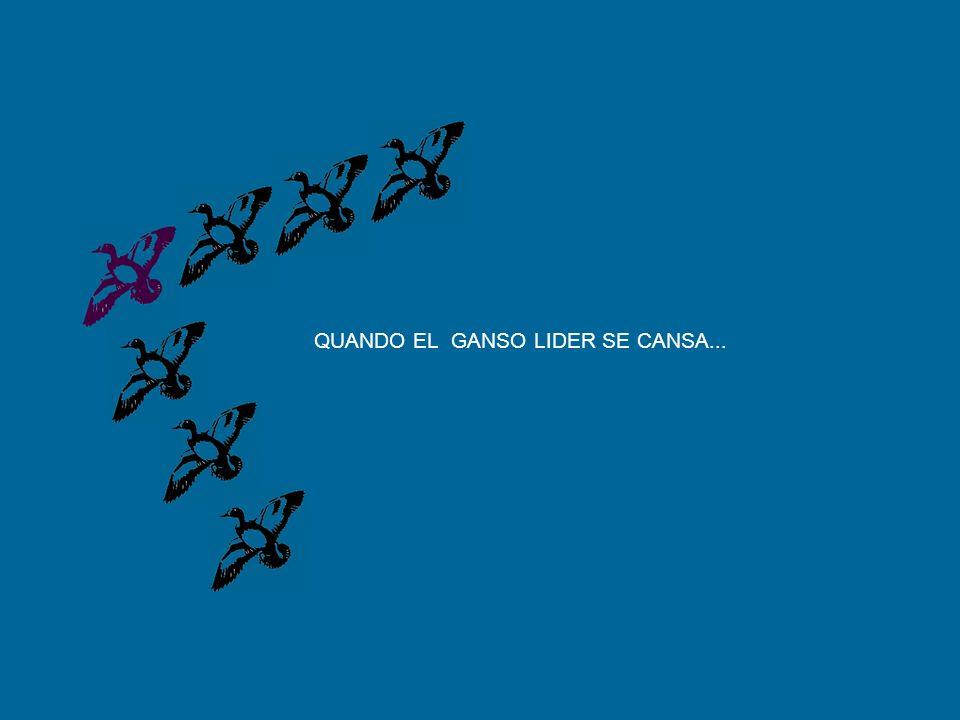 QUANDO EL GANSO LIDER SE CANSA...