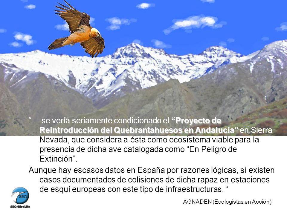 … se vería seriamente condicionado el Proyecto de Reintroducción del Quebrantahuesos en Andalucía en Sierra Nevada, que considera a ésta como ecosistema viable para la presencia de dicha ave catalogada como En Peligro de Extinción .