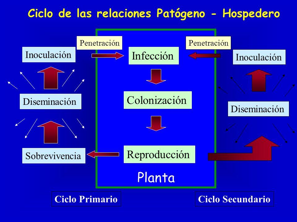 Planta Ciclo de las relaciones Patógeno - Hospedero Infección