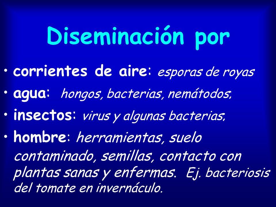 Diseminación por corrientes de aire: esporas de royas