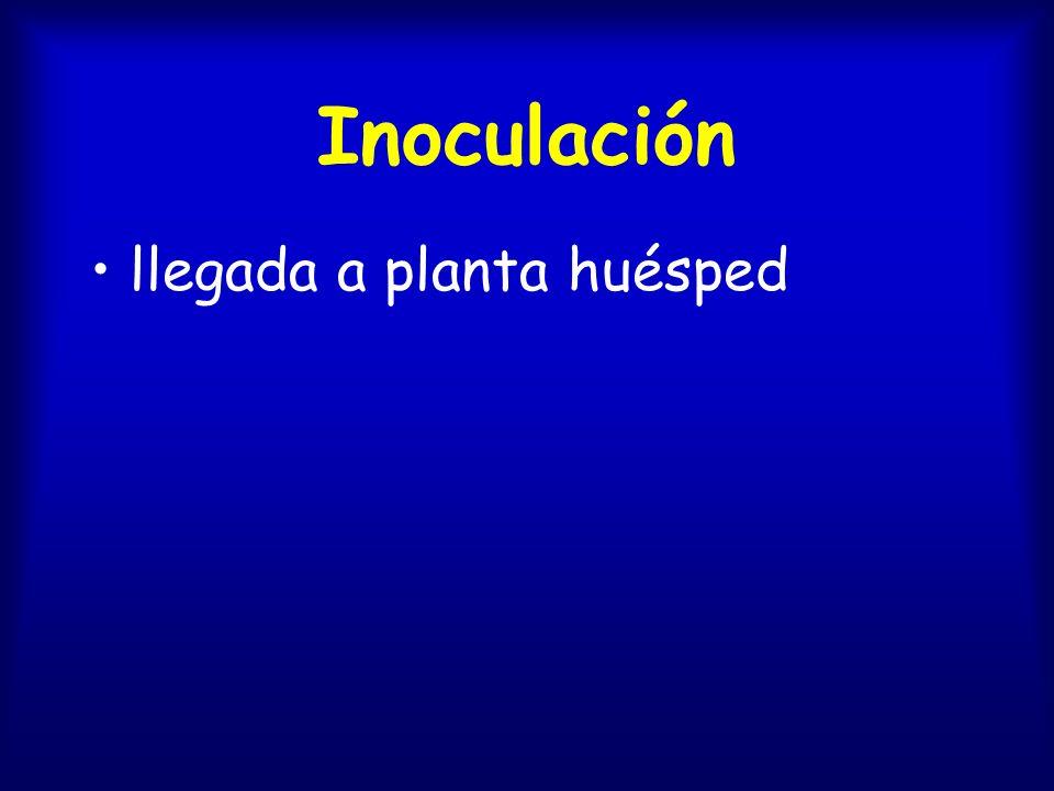 Inoculación llegada a planta huésped