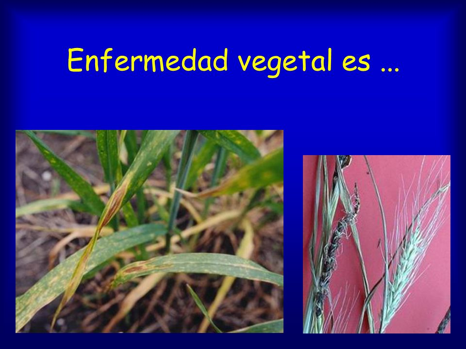 Enfermedad vegetal es ...
