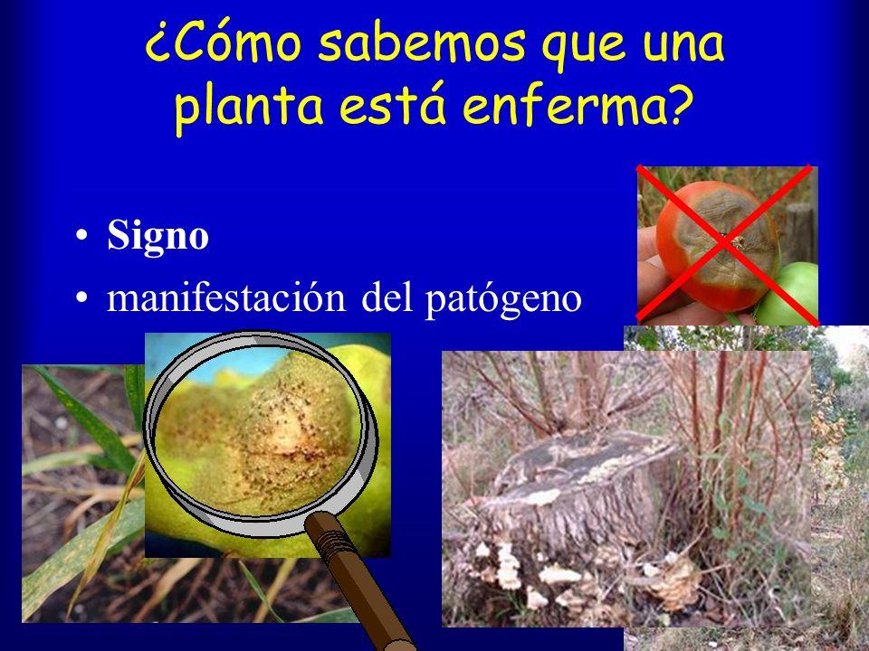 ¿Cómo sabemos que una planta está enferma